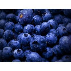 蓝莓,江苏康泉农业,扬州蓝莓种植图片
