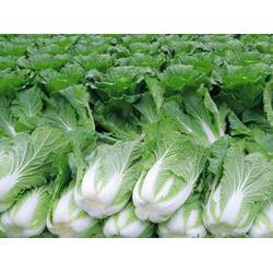 东莞蔬菜配送、蔬菜配送、山农农副钱柜娱乐配送(查看)图片