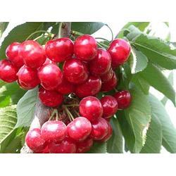 水果配送,山农农副产品配送,水果配送报价图片