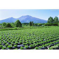 无公害蔬菜配送公司,山农农副产品配送,蔬菜配送公司图片