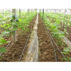 滴灌管厂家直供、清润节水、滁州滴灌管图片