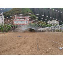 贵州温室大棚-日光温室大棚-沃野钢架温室大棚(优质商家)图片