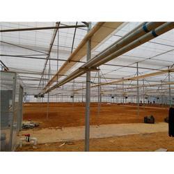 电动温室大棚造价-电动温室大棚-温室大棚搭建安装图片