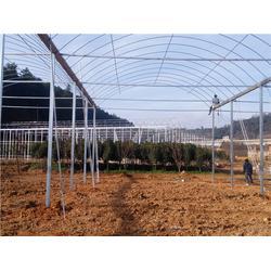 石林钢架大棚-科创温室工程-简易钢架大棚图片