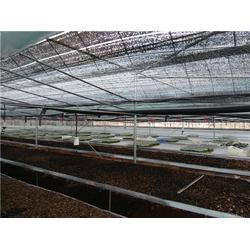贵阳钢架大棚-简易钢架大棚-科创温室工程(优质商家)图片