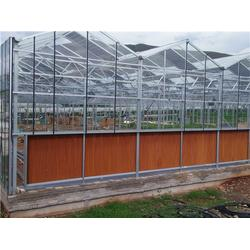 六盘水钢架大棚,沃野钢架温室大棚,农用钢架大棚图片