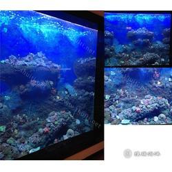 亚克力鱼缸、雅瑞、亚克力鱼缸 定做图片