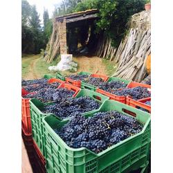 葡萄酒和红酒哪个好喝-加诺葡萄酒-防城港葡萄酒图片