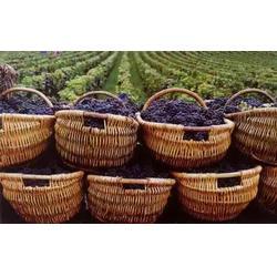 哪种红酒好喝-香港红酒-加诺葡萄酒(查看)图片