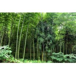 红叶小檗、红叶小檗销售、懋懋园林绿化(推荐商家)