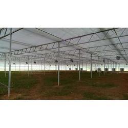 临沧玻璃温室大棚-玻璃温室大棚多少钱-楚宏农业图片