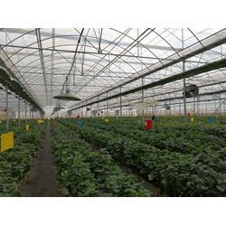 楚宏农业、临沧花卉温室大棚设计、临沧花卉温室大棚图片