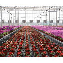 日光温室大棚|安徽温室大棚|合肥新一佳图片