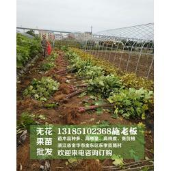 无花果种植、金华无花果、[惠星农场]苗木图片