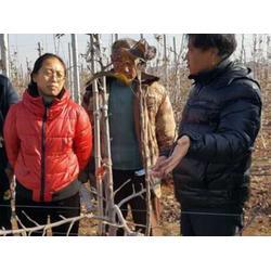 渭南洛川苹果经销-康霖现代农业-渭南洛川苹果经销的供货图片