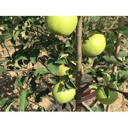 红乔王子苹果,康霖?#25191;?#20892;业红乔王子苹果,红乔王子苹果图片
