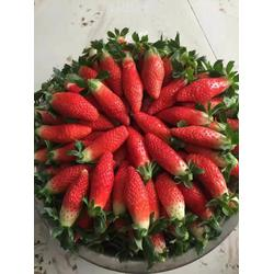 临沂草莓苗,咖啡草莓苗,乾纳瑞农业(多图)图片