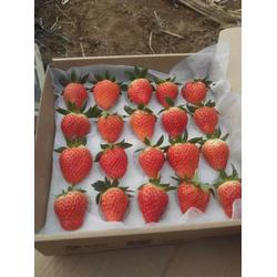 枣庄草莓苗_香蕉草莓苗种苗_乾纳瑞农业图片