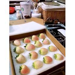 张家口草莓苗_乾纳瑞农业_草莓苗品种图片