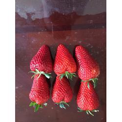 乾纳瑞农业(图)_妙香7号草莓苗_东营草莓苗图片