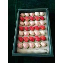 乾纳瑞农业(图)、草莓苗哪里有、鹰潭草莓苗图片