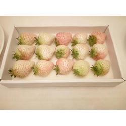 乾纳瑞_咖啡草莓苗_图木舒克咖啡草莓苗图片