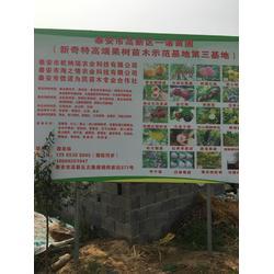 梨树苗 红梨树苗 乾纳瑞农业科技优惠价(多图)图片