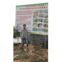 乾纳瑞农业科技好品质(图),梨树苗多少钱一棵,梨树苗图片