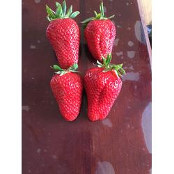 铜陵草莓苗 乾纳瑞农业(优质商家) 桃熏白草莓苗种植技术