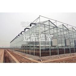 qz远航温室玻璃温室图片