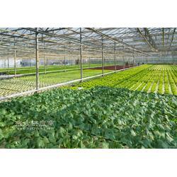 qz远航温室、蔬菜温室图片