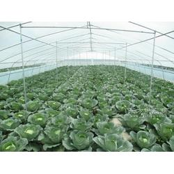 遠航溫室,蔬菜大棚圖片