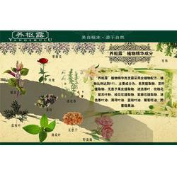 养枢露(多图)、西藏养枢露养发育发店加盟图片