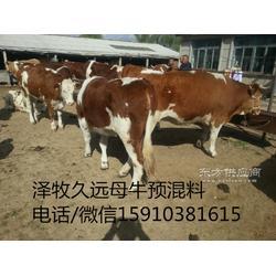 有些母牛长期不发情不打栏养殖户怎么办图片