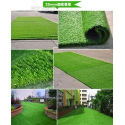 人造草坪厂家25mm加密春草图片