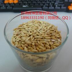 大麦进口 容重高 饲料大麦图片