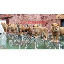 老虎表演出租马戏杂技表演在当下是较受欢迎图片