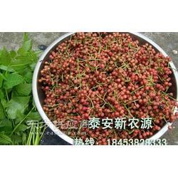 大红袍花椒苗种植基地图片