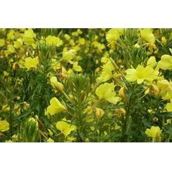 迪庆花种、景江园林绿化、迪庆花种哪家便宜图片