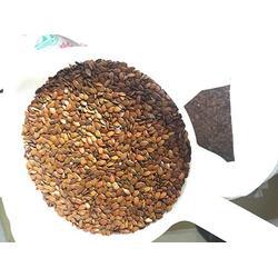 景江园林绿化,云南马桑种子,云南马桑种子图片