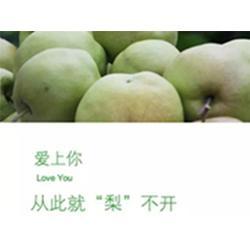 新品种香梨|景盛果业|新品种香梨黄陵翡翠梨图片