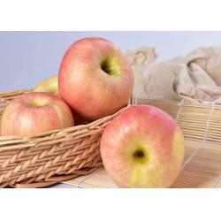 陕西洛川苹果,陕西洛川苹果,景盛果业图片