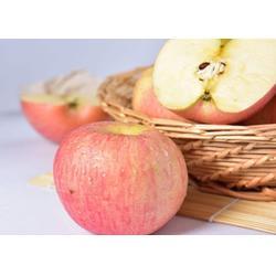 洛川苹果、洛川苹果果园、景盛果业(推荐商家)