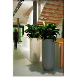 办公室绿植出租-洪山绿植出租-梦菲园艺图片