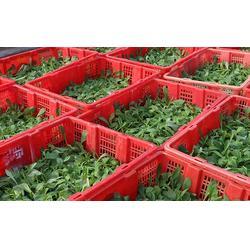 花卉种苗市场-汇通银河花卉种苗-临沧花卉种苗图片