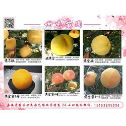黄金脆桃树苗1公分、2公分、3公分介绍大全图片