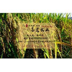 山稻米礼盒,粒粒仔山稻米绿色健康,山稻米图片