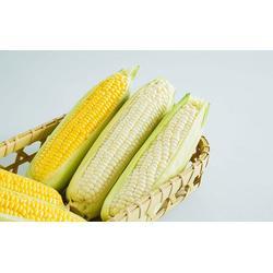 玉米、上海骧旭农产品、玉米加工图片
