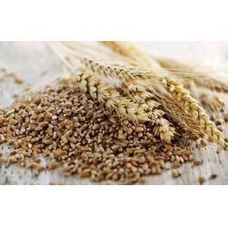 济南 麸麦| 麸麦|上海骧旭农产品(查看)图片