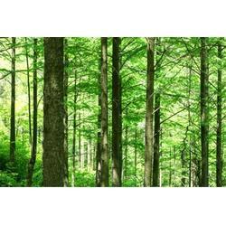 池杉小苗-淘氧彩叶苗木(在线咨询)莱芜池杉图片